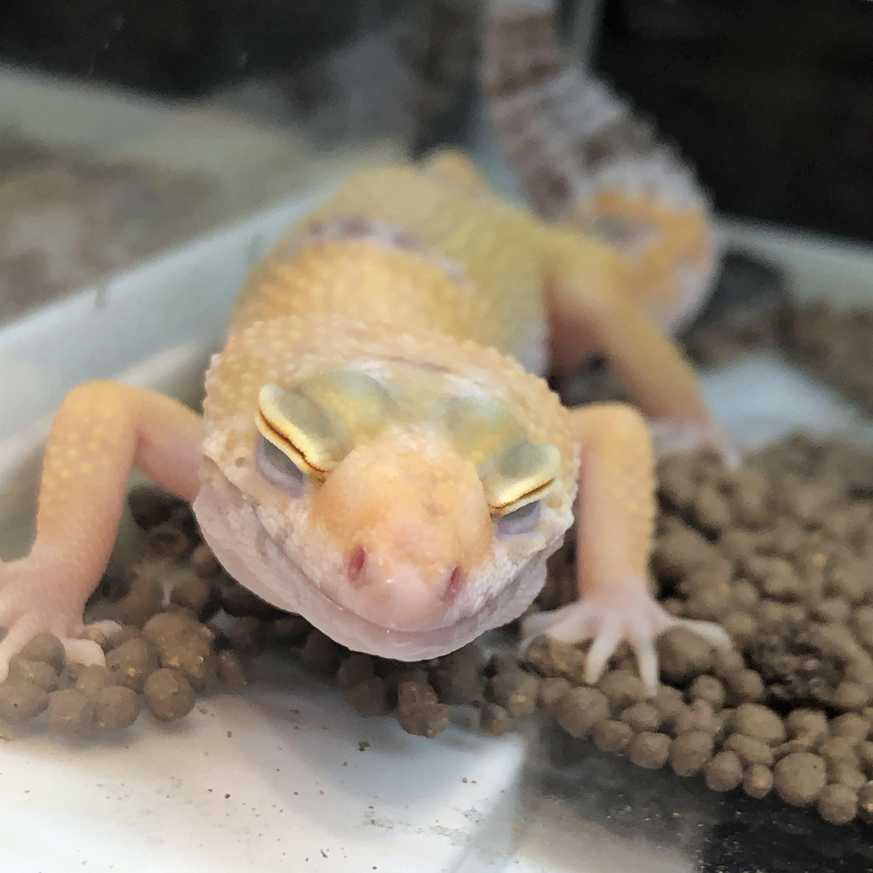 爬虫類との付き合い方